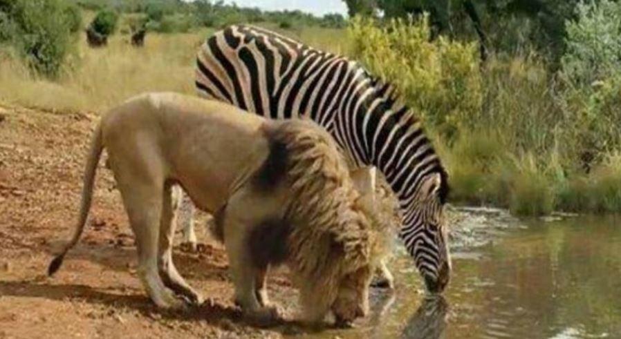 Sonhar com animais: Significado, Interpretação