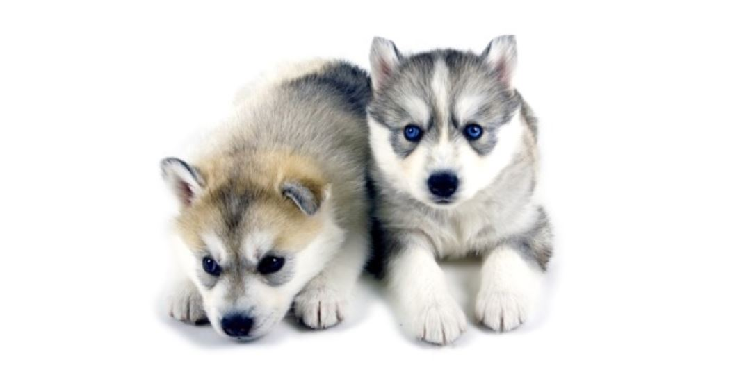 Mordida de Cão: Significado e Interpretação dos Sonhos