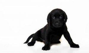 Sonhar com cachorro preto: Significado, Interpretação