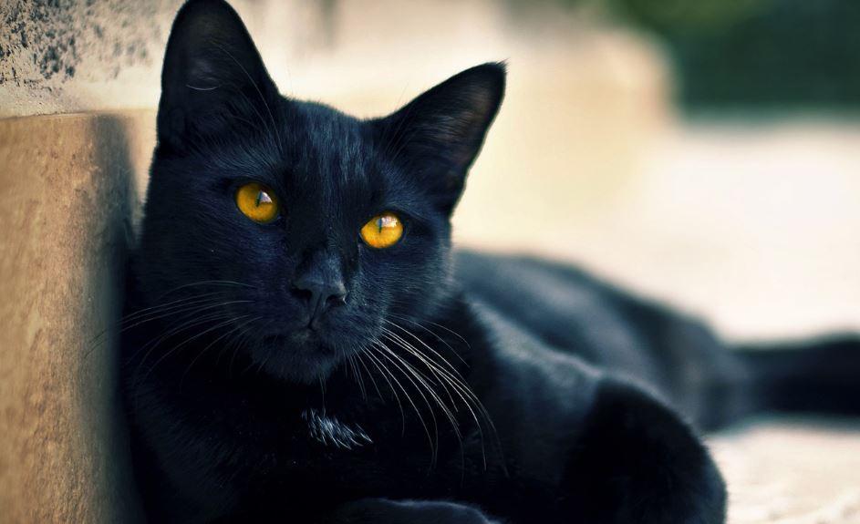 Gato Preto: Sonho Significado, Interpretação, Símbolos