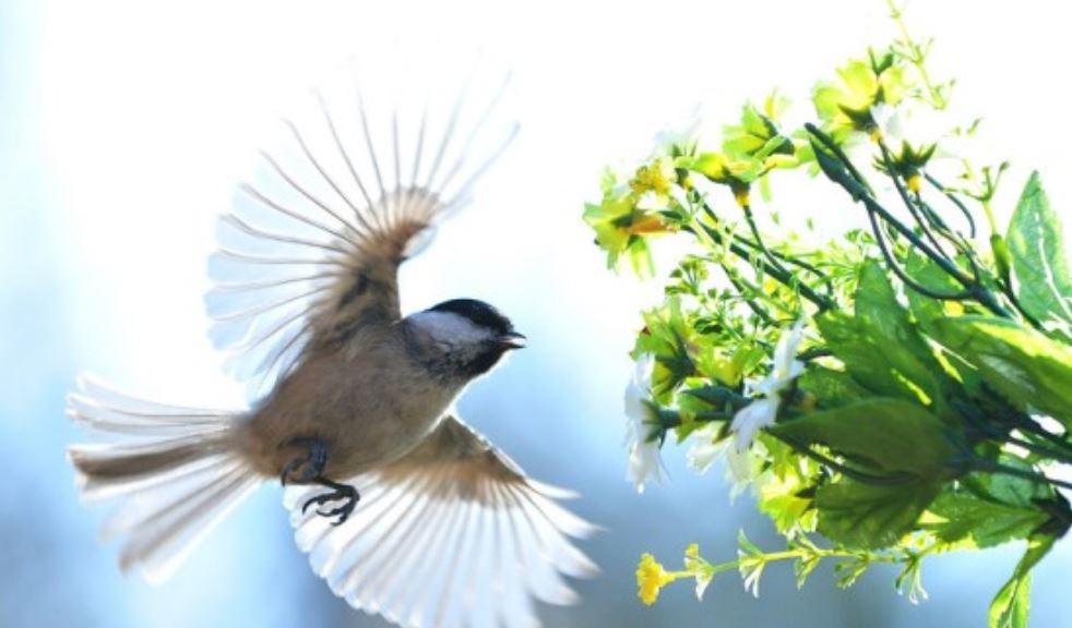 Sonhar com passarinho: Significado, Interpretação