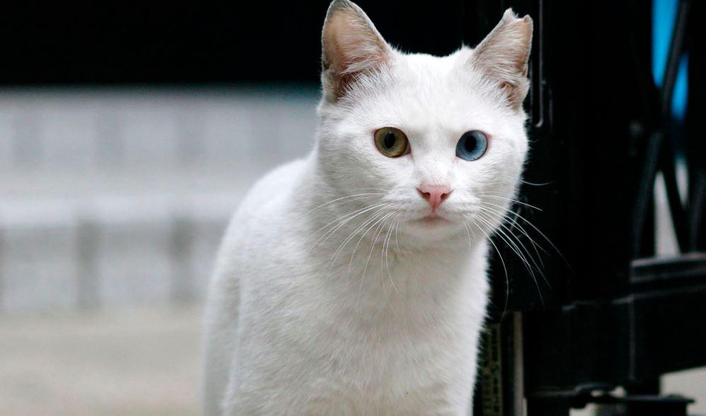 Sonhar com gato: Significado e interpretação de sonhos