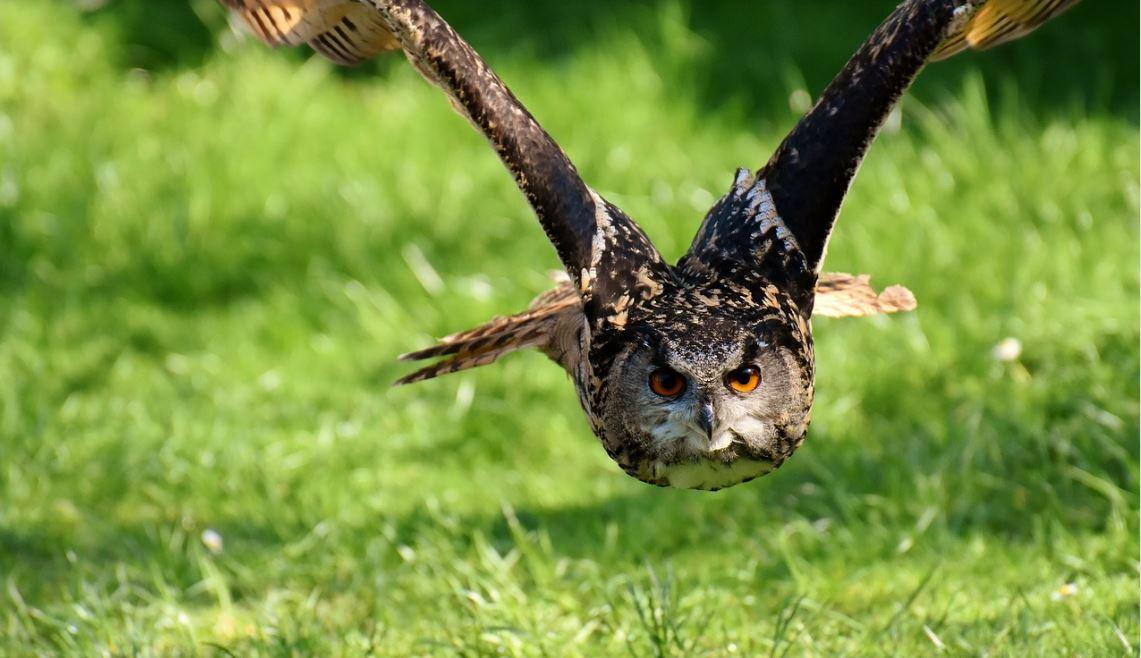 Sonhar com coruja: Significado e interpretação de sonhos