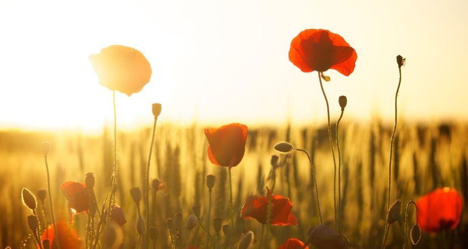 Sonhar com flores: Significado e interpretação de sonhos