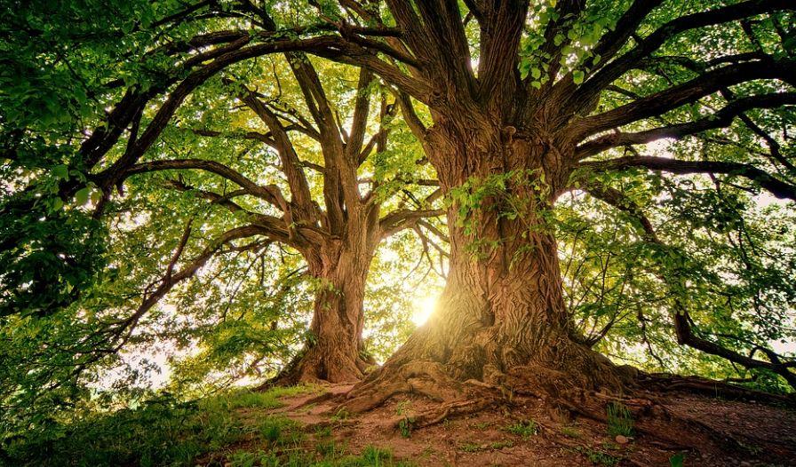 Sonhar com árvores: Significado e interpretação de sonhos