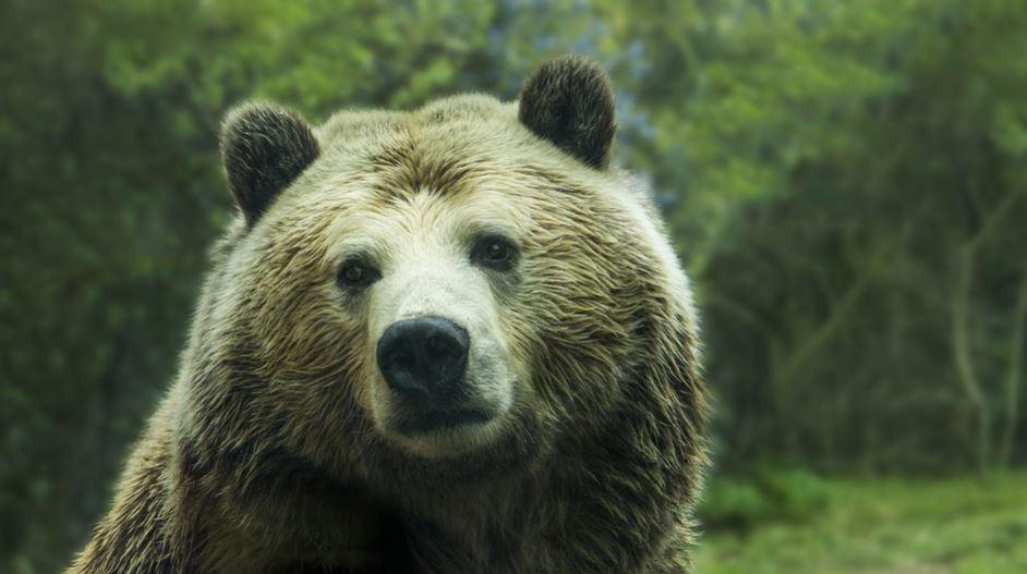Sonhar com urso: Significado e interpretação de sonhos