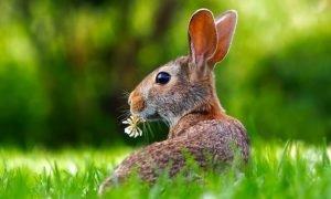 Sonhar com animais: Significado e interpretação de sonhos
