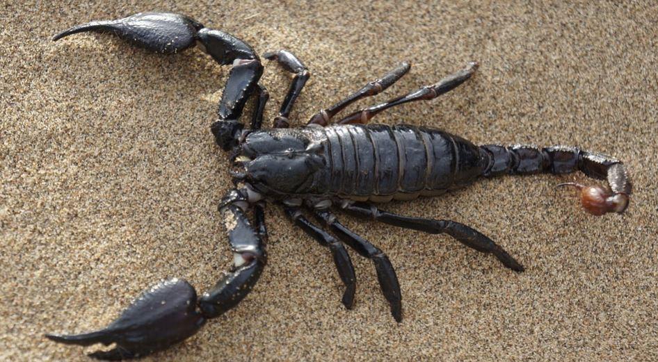 Sonhar com escorpião: Significado e interpretação de sonhos