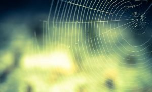 Sonhar com aranha: Significado e interpretação de sonhos