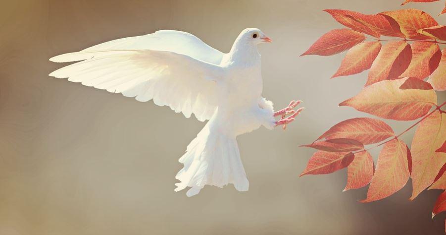Sonhar com pássaro: Significado e interpretação de sonhos