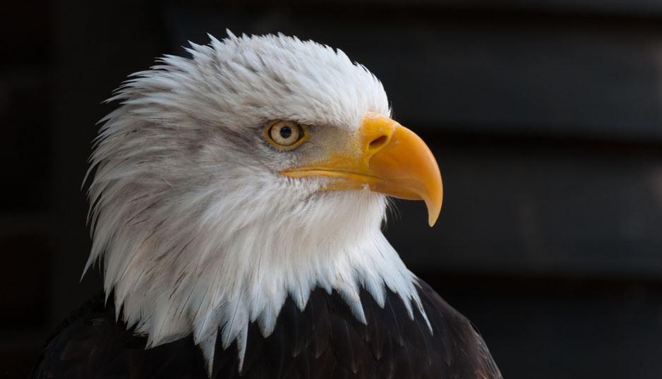 Sonhar com águia: Significado e interpretação de sonhos