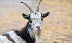 Planeta regente de capricornio: Significado Dos Signos Do Zodíaco