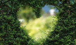 Horóscopo Áries Amor: Significado Dos Signos Do Zodíaco