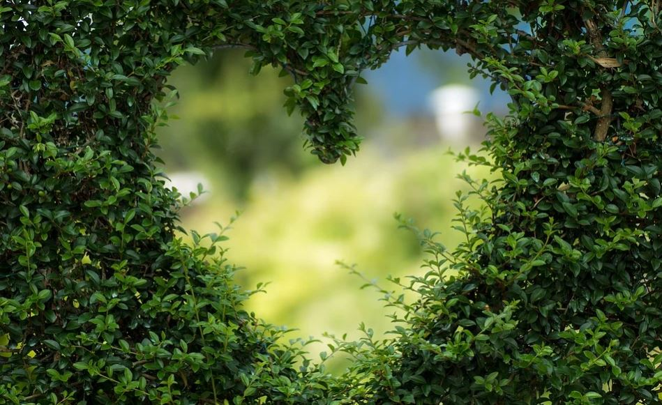 Horóscopo Áries Amor
