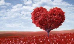 Signo de touro no amor: Significado Dos Signos Do Zodíaco