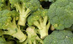 Brócolis: 23 benefícios e propriedades para a saúde