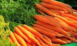 Cenoura: 17 benefícios e propriedades para a saúde