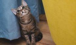 Sonhar com gato: Significado dos Sonhos