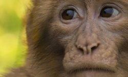 Sonhar com macaco: Significado dos Sonhos
