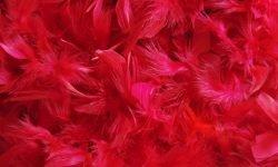 Sonhar com a cor vermelha: Significado dos Sonhos