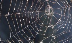 Sonhar com teia de aranha: Significado dos Sonhos