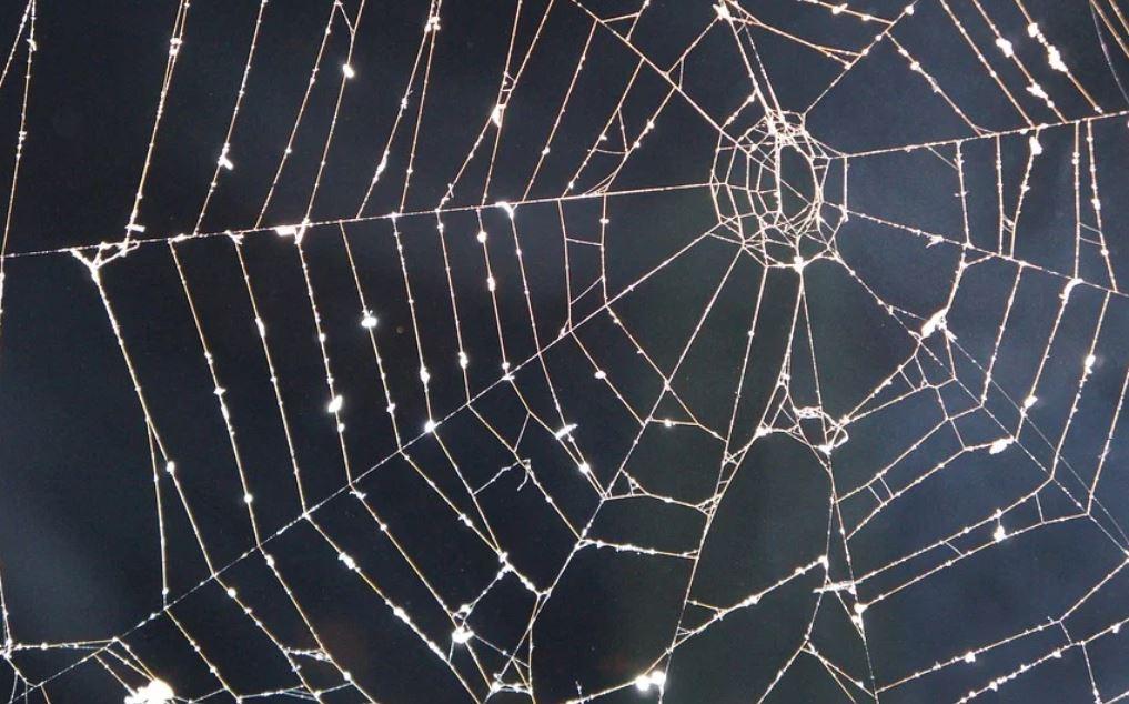 Sonhar com teia de aranha